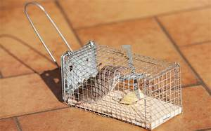How To Make A Mouse Trap That Does Not Kill