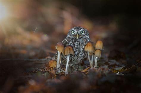 owls tiny adventures   woods  tanja