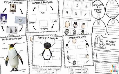 Penguin Cycle Bird Children Preschool Kindergarten Activities
