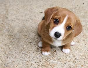 Best Puppy Dog Eyes | HEAL