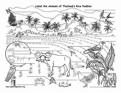 Rice Paddy Arctic Animals Biomes Core Webs