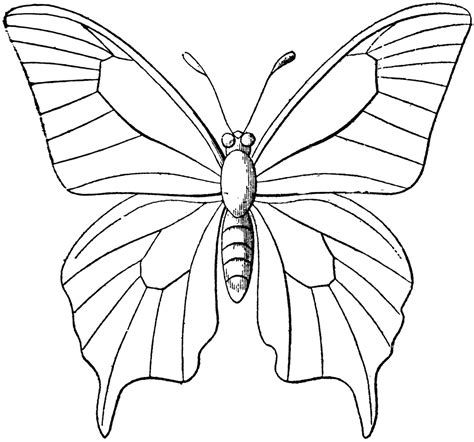 Coloring Images Of Butterflies by Butterfly Outline Clipart Etc