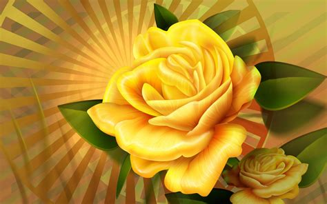 yellow rose wallpapers hd wallpapers id
