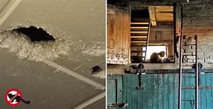 Marder Vertreiben Dachboden Ultraschall : marder im haushalt wie verschrecken dauerhaft loswerden blog gardigo ~ Frokenaadalensverden.com Haus und Dekorationen
