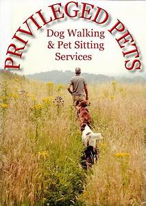 Privileged pets for Professional dog walking service