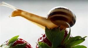 Was Fressen Schnecken : schneckenfutter was fressen schnecken was nicht tipps tricks ~ Orissabook.com Haus und Dekorationen