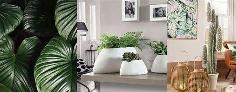 piante da arredo interno l oca nera 5 idee per arredare casa con le piante da interno