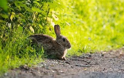 Rabbit Bunny Bunnies Rabbits Wallpapers Xiaomi 1920a