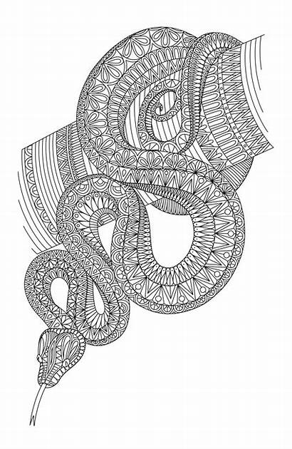 Snake Zentangle Pages Coloring Drawing Adult змея