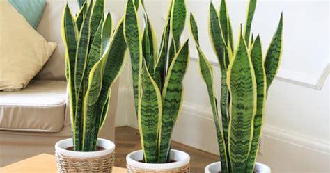 tips memilih tanaman hias cocok rumah