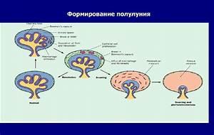 Лекарства о повышенного внутричерепного давления