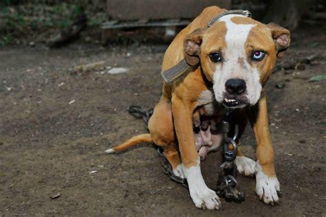 animal rescue raids  west virginia demonstrate reach