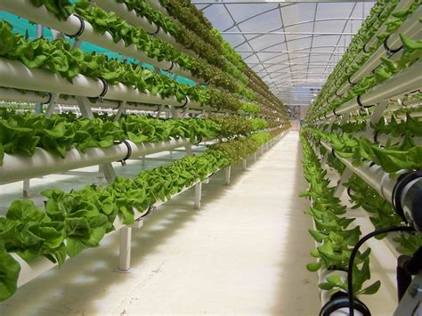 Hydroponic Gardening by Hydroponic Gardening How