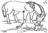 Horse Coloring Pages Printable Kind Horses Know sketch template