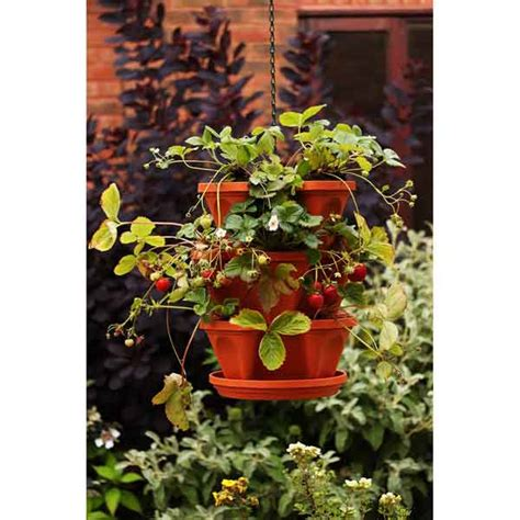 hanging strawberry planter strawberry planters in stock now greenfingers