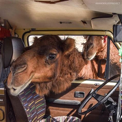 75 Best Pets Living The Vanlife Images On Pinterest Van