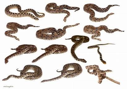 Snake Clipart Snakes Resimleri Colourful Tiger Yilan