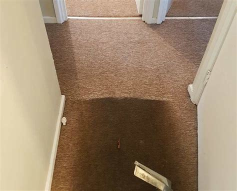 Mattress Cleaning In Epsom, Kt18 Carpet Cleaners Ogden Ut Red Inn Kissimmee Fl 34746 How To Get Dried Permanent Marker Out Of Coupons Clovis Ca Brentwood Carpetright Stretch A With Wrinkles Cleaning Dr Abbey And Floor Reviews
