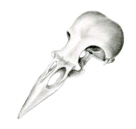 sweet nature bird skull drawing