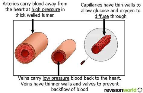 blood transport  level level revision biology