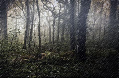 rain   woods  dven ephotozine
