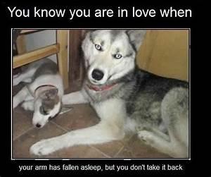 FUNNY LOVE MEME PICS image memes at relatably.com