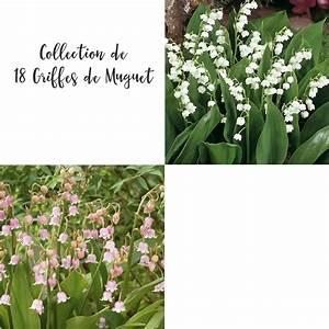 Quand Planter Le Muguet : les 18 griffes de muguet offres sp ciales et cadeaux ~ Melissatoandfro.com Idées de Décoration