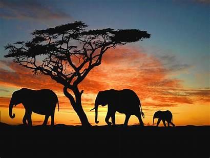 African Desktop Backgrounds Wallpapersafari Wallpapers Lion Animal