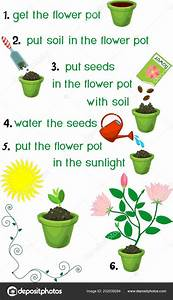 Instructions How Plant Flower Sequence Easy Steps  U2014 Stock