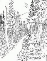 Coloring Forest Pages Nature Popular sketch template