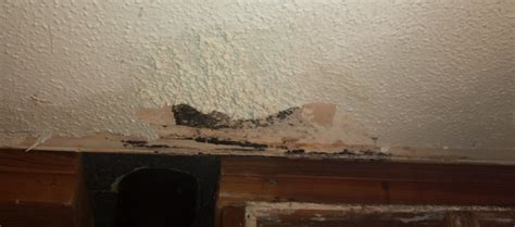 moldy drywall drywall plaster diy chatroom home