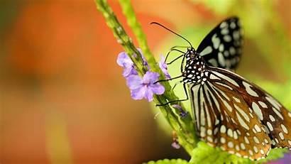 4k Butterfly Flower Purple Flowers Wallpapers Butterflies