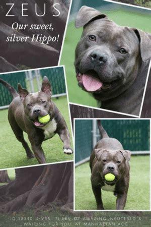 zeus  sweet silver hippo id   yrs  bs
