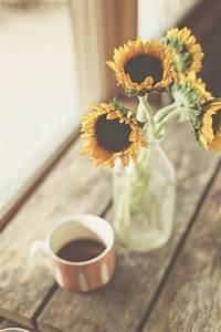 sunflower quote | Tumblr
