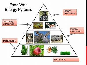 128 best images about Food Chain on Pinterest | Arctic ...