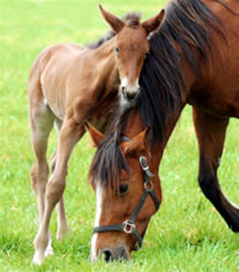 tying horses horse young mother chronic sporadic basics stables stable management