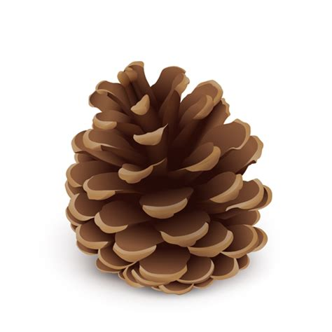 The Chew Templates Pine Cones Animals by Realistlic Pine Cone Vector Material Vector Christmas