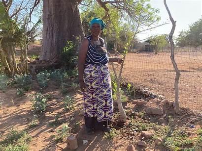 Tree Essences African Facilitation Annah Meters Eco