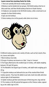 Facts About Monkeys For Kids Childhood Education