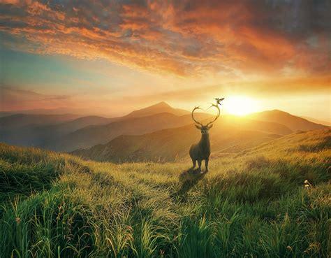 wallpaper sunset deer mountains bird landscape hd