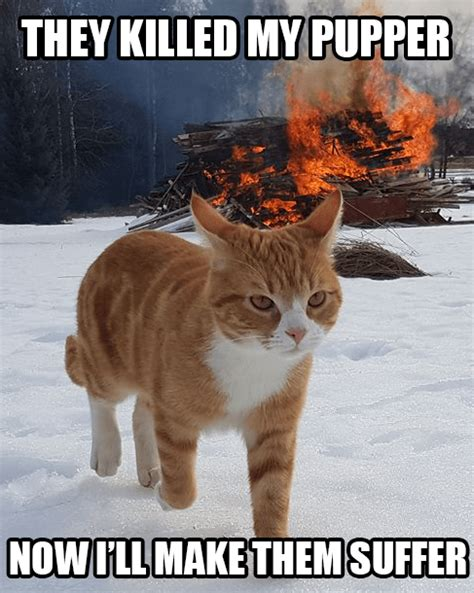 cats walking   explosions   parody  cool