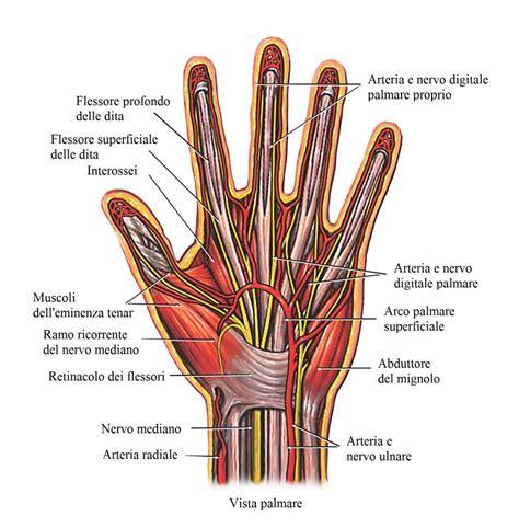 dolore interno braccio sinistro dolore al polso destro o sinistro esterno tendinite