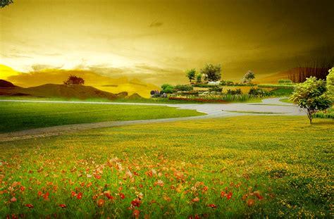 beautiful natural scenery background flowers grassland