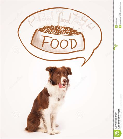 Cute Border Collie Dreaming About Food Stock Image