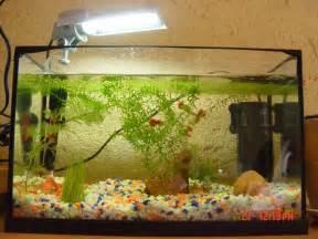 bac 20l et 96l install 233 s et mis en eau forum aquarium