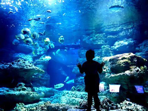 cuisine de cing le roi des aquarium 28 images de l aquarium ex