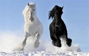 Black, And, White, Horse, 3840x2400, Hd, Wallpaper, Wallpapers13, Com