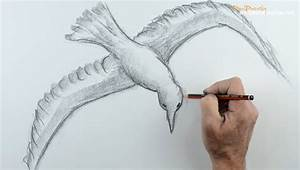 Raven Flying Drawing At Getdrawingscom Free For