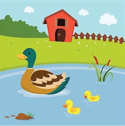 Pond Cattail Illustrations Duck Farm Clip Swimming