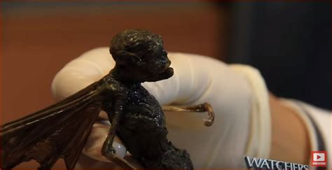 Strange winged creature in Mexico: Fairy? Alien? or